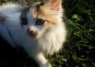 UmayWeb Pics_Kitten_1